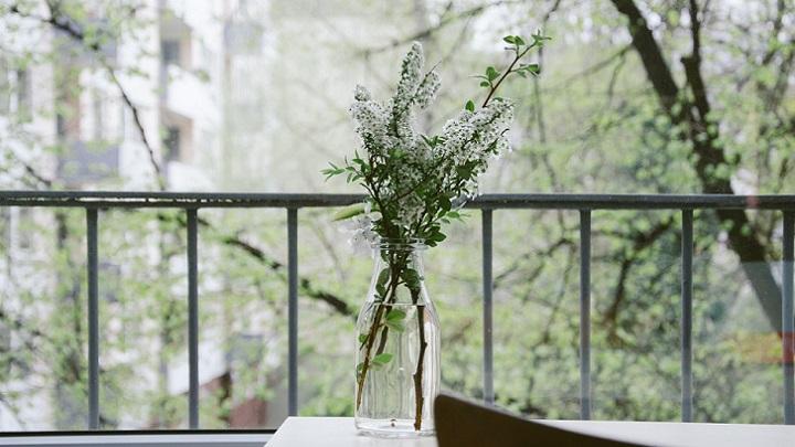 plantas-en-la-ventana