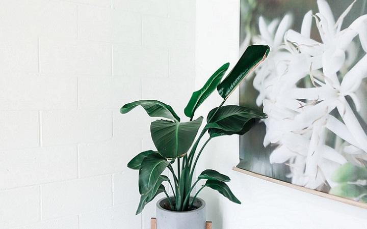 planta-junto-a-cuadro-de-naturaleza