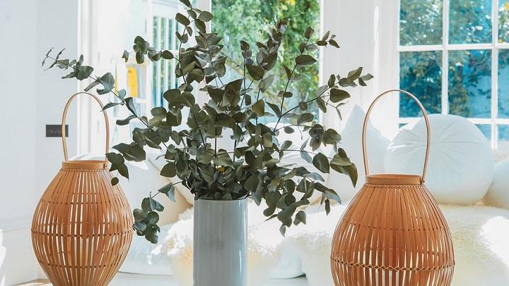 plantas-en-decoracion