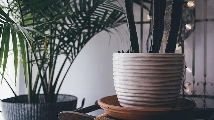 plantas-y-macetas