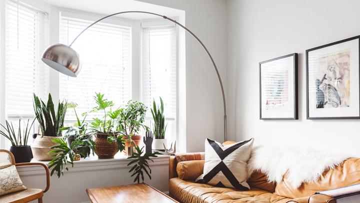 plantas-salon