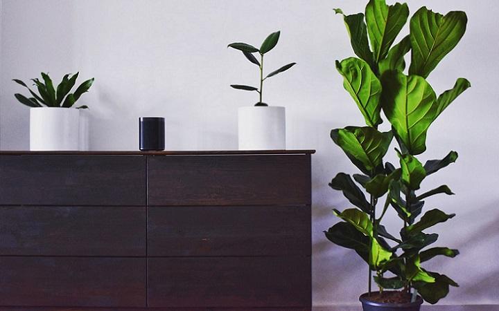 mueble-de-madera-y-plantas