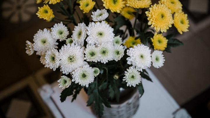 flores-blancas-y-amarillas