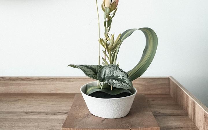 planta-sobre-el-mueble