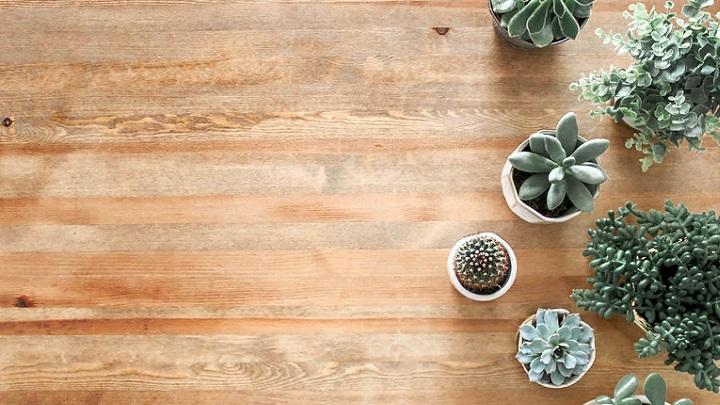 plantas-sobre-el-suelo