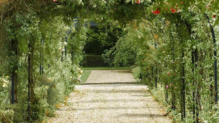 plantas-en-el-jardin