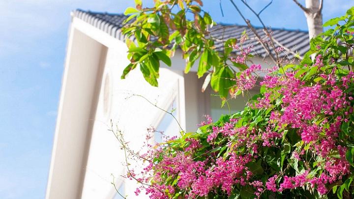 flores-en-el-jardin