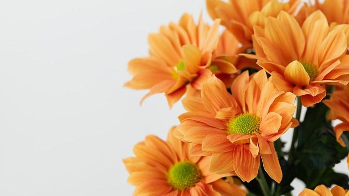 flores-de-color-naranja