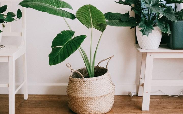 plantas-en-casa